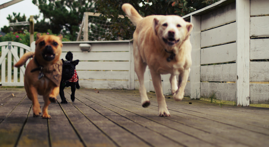 hund-pinkelt-andere-hunde-und-menschen-an