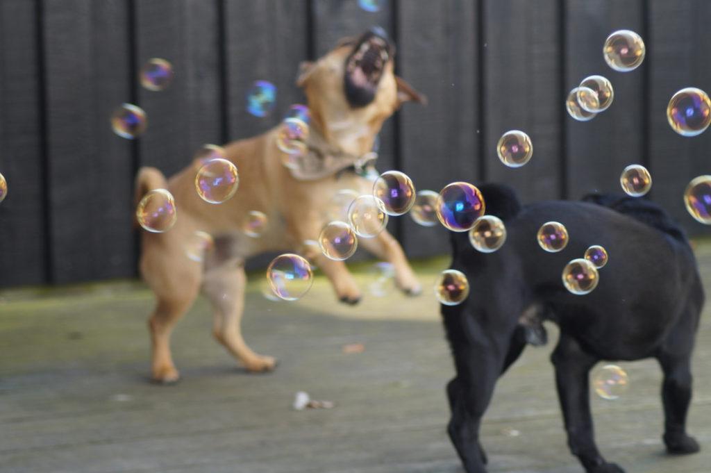 hund-pinkelt-aus-trotz