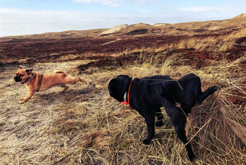 hund-pinkelt-draussen