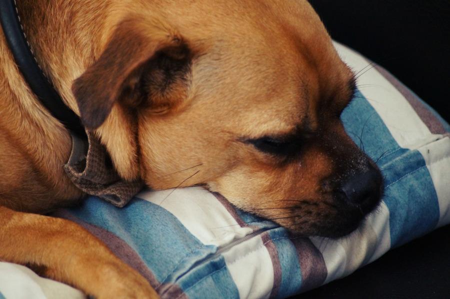 hund-pinkelt-ins-eigene-koerbchen
