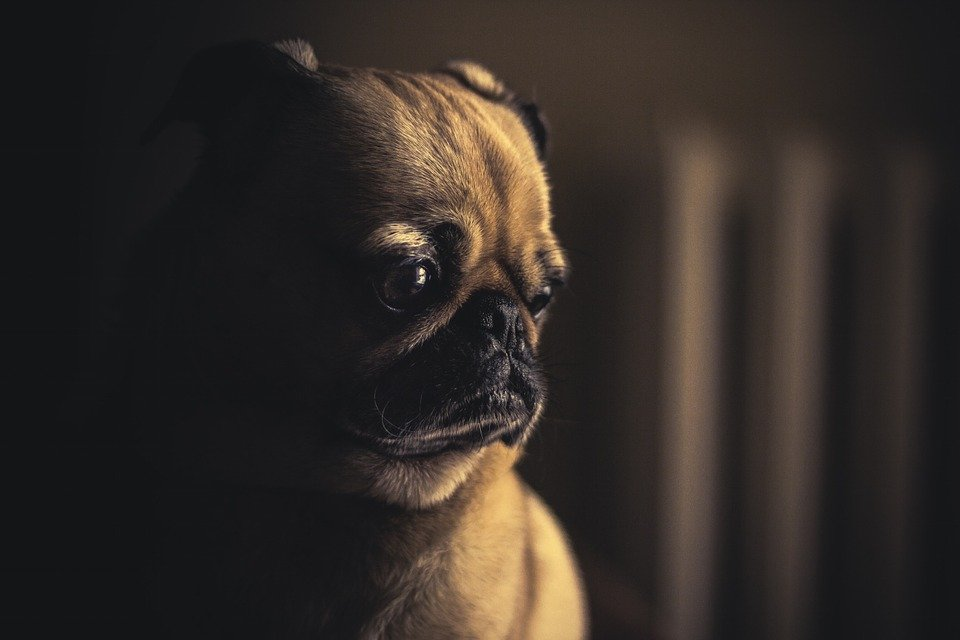 hund-pinkelt-nachts