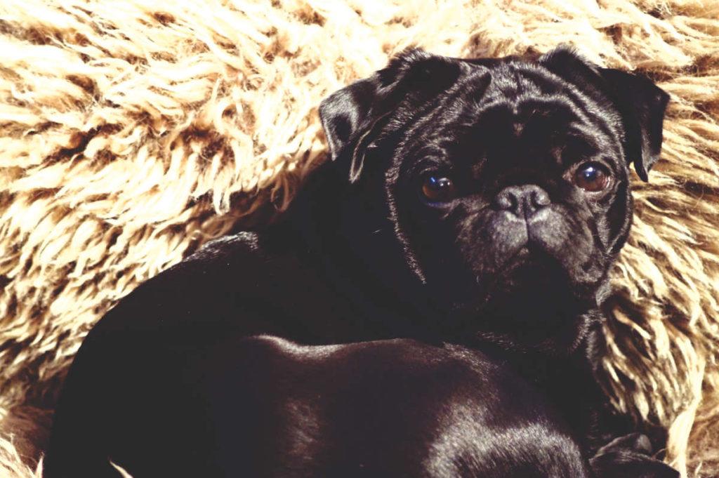 hund-pinkelt-nahrungsergaenzung