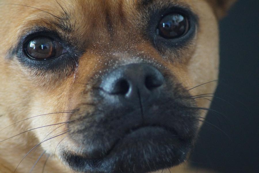 hund-pinkelt-troepfchenweise